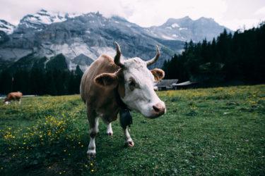 【スイス・ドイツ語圏4州の独自措置】イベント・レストラン等【スイスの新型コロナウイルスの対策】