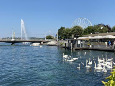 スイスで36度を記録 !? 2020年7月31日、超暑いジュネーブの街のレポート【熱中症対策4つ】